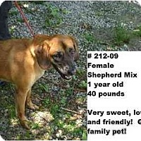 Adopt A Pet :: # 212-09 - Animal Shelter - Zanesville, OH