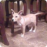 Adopt A Pet :: Max - Mesa, AZ