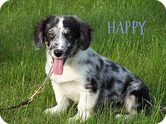 Happy Adopted Puppy Milford Nj Dachshund Border Collie Mix