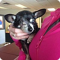 Adopt A Pet :: JAZMIN - Surrey, BC