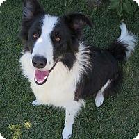 Adopt A Pet :: WALTER - Nampa, ID