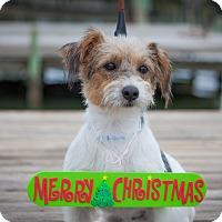 Adopt A Pet :: Ollie - Sneads Ferry, NC