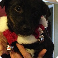 Adopt A Pet :: Nick - Washington, PA