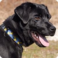 Adopt A Pet :: Bixby - Cincinnati, OH