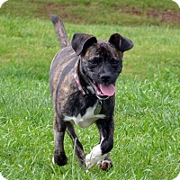 Adopt A Pet :: Lena - Knoxville, TN