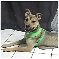 Adopt A Pet :: Adelle - Forked River, NJ