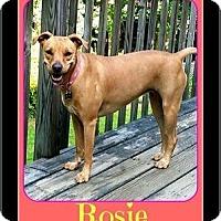 Adopt A Pet :: Rosie - Milton, GA