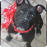 Adopt A Pet :: Pippa - Johnson City, TX