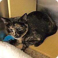 Adopt A Pet :: Kalinda - Colmar, PA