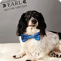 Adopt A Pet :: Earl-Pending Adoption - Omaha, NE
