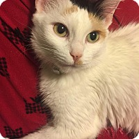 Adopt A Pet :: Eloise - Whittier, CA