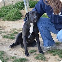 Adopt A Pet :: Wilma - Charlemont, MA