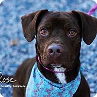 Adopt A Pet :: Buzz - Kaufman, TX