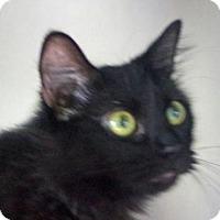 Adopt A Pet :: Sweet Pea - Englewood, FL