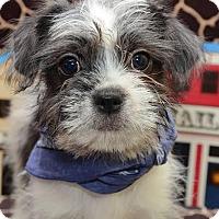 Adopt A Pet :: Rigby Roycette - Urbana, OH