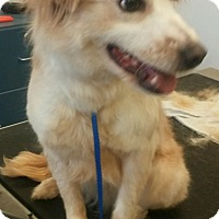 Adopt A Pet :: Sunny - Fairview Heights, IL
