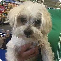 Adopt A Pet :: Schubert - Loudonville, NY