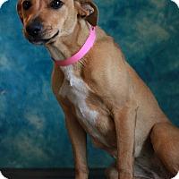 Adopt A Pet :: Palmer - Waldorf, MD