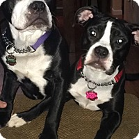 Adopt A Pet :: Gage and Bebe - Pittsburgh, PA
