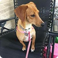 Adopt A Pet :: Jamilla - Arlington Heights, IL