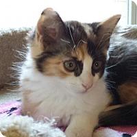 Adopt A Pet :: Princess Diana - Fullerton, CA