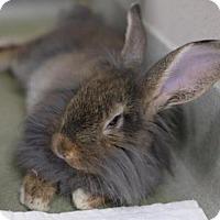 Adopt A Pet :: 3-40 ATTICUS - Boston, MA