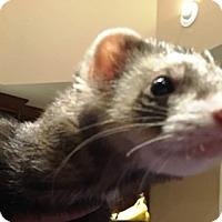 Adopt A Pet :: Diesel - Hartford, CT