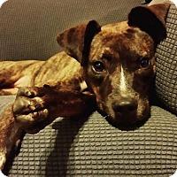 Adopt A Pet :: Roxanne - Dayton, OH
