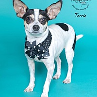 Adopt A Pet :: Terrie - Houston, TX