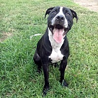 Adopt A Pet :: Riddick - Oakhurst, NJ