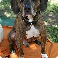 Plott Hound Mix Dog for adoption in Tomball, Texas - Ozzie