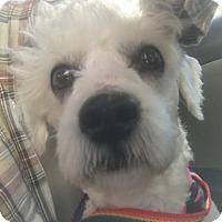 Adopt A Pet :: Denali - Spring, TX