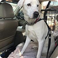 Adopt A Pet :: Sonny - Manchester, NH