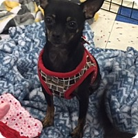 Adopt A Pet :: Bitty - Hurst, TX
