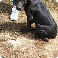 Adopt A Pet :: Pablo - Pocahontas, AR