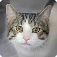 Adopt A Pet :: Khloe - Lancaster, MA