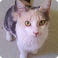 Adopt A Pet :: Precious - Jeffersonville, IN
