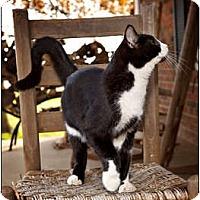 Adopt A Pet :: Jax - Owensboro, KY
