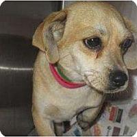 Adopt A Pet :: BONNIE and Clyde (BONNIE) - Duluth, GA