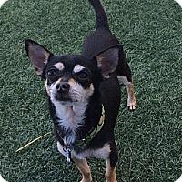 Adopt A Pet :: Toby - San Jose, CA