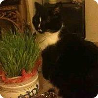 Adopt A Pet :: Cora - Gaithersburg, MD