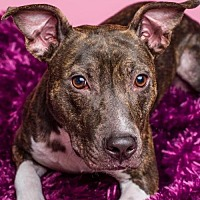Adopt A Pet :: Betty Rue (courtesy listing) - Baton Rouge, LA