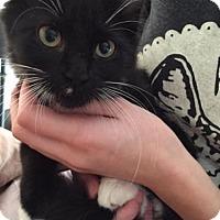 Adopt A Pet :: Maple 151814 - Atlanta, GA