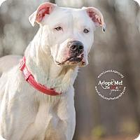 Adopt A Pet :: Mia - Cincinnati, OH