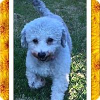Adopt A Pet :: Pending!! Beatrice - N. TX - Tulsa, OK