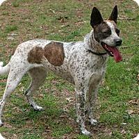 Adopt A Pet :: Jill - New City, NY