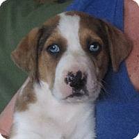 Adopt A Pet :: Alec - Greenville, RI