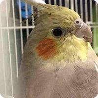 Adopt A Pet :: A100378 - Murray, UT