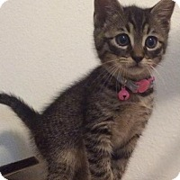 Adopt A Pet :: Catrick Dempsey - Gainesville, FL