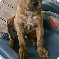 Adopt A Pet :: Chompers - Pembroke, GA